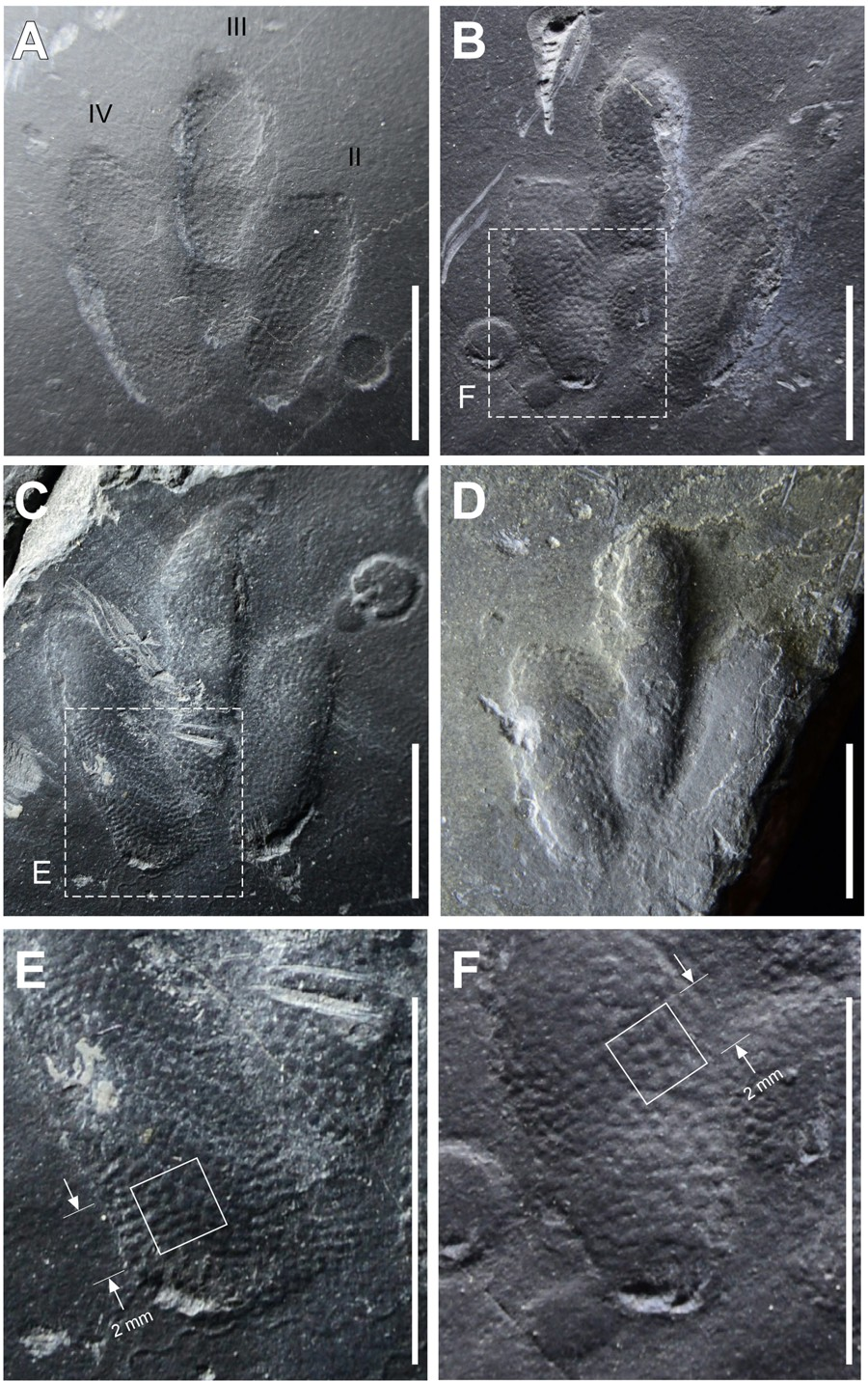 Vestígio foi localizado na cidade de Jinju, na Coréia (Foto: Exquisitely-preserved, high-definition skin traces in diminutive theropod tracks from the Cretaceous of Korea)