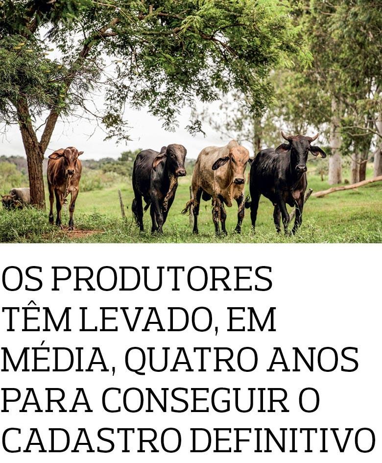 Queijo (Foto:  )