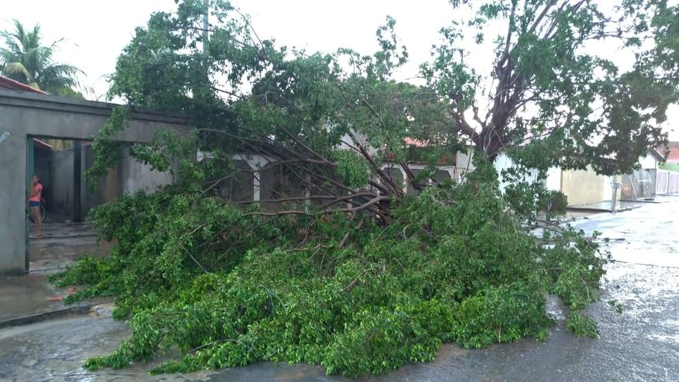 Defesa Civil registrou queda de árvores na cidade — Foto: Polícia Militar