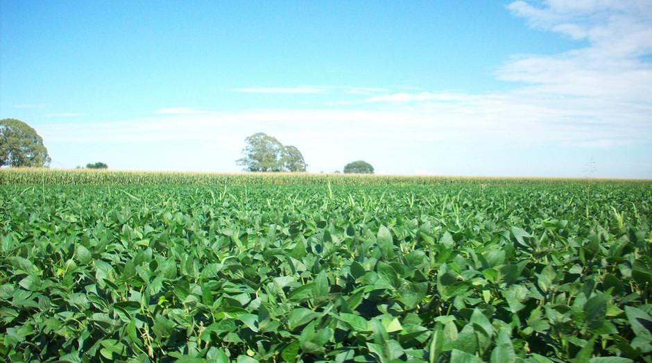 soja, plantação, agronegócio, agricultura (Foto: Reprodução/Wikimedia Commons)