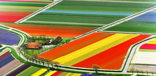 Campos de tulipa, Holanda (Foto: Reprodução Pinterest / Huffingtonpost)