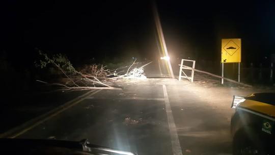 Foto: (Divulgação/Polícia Rodoviária Federal do Maranhão (PRF-MA))