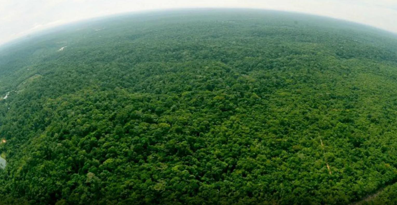 Jovens perdidos na Reserva Adolpho Ducke, em Manaus, são encontrados