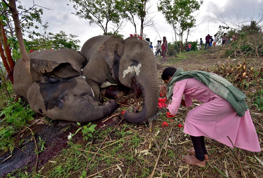 Mulher ao lado das carcaças de elefantes encontrados mortos na Índia. Eles possivelmente morreram por causa de um raio, no sopé da reserva Kundoli, em 14 de maio de 2021. — Foto: Anuwar Hazarika/Reuters