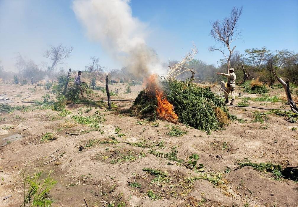 Droga foi incinerada por militares — Foto: Divulgação/SSP-BA