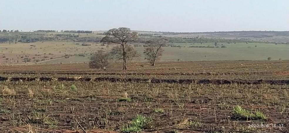 Fiscalização constatou queimada em fazenda em Presidente Epitácio — Foto: Polícia Militar Ambiental