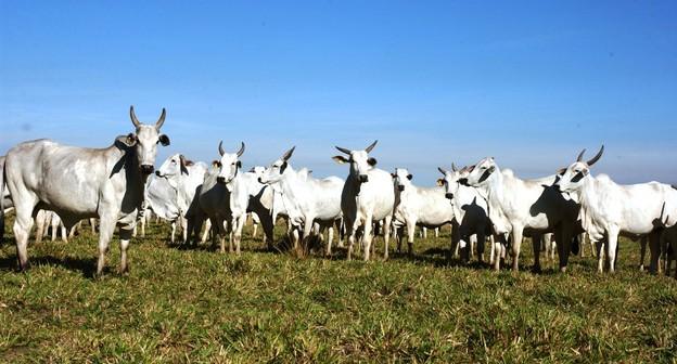 Embargo da China à carne bovina gera perdas de mais de US$ 60 milhões em Mato Grosso