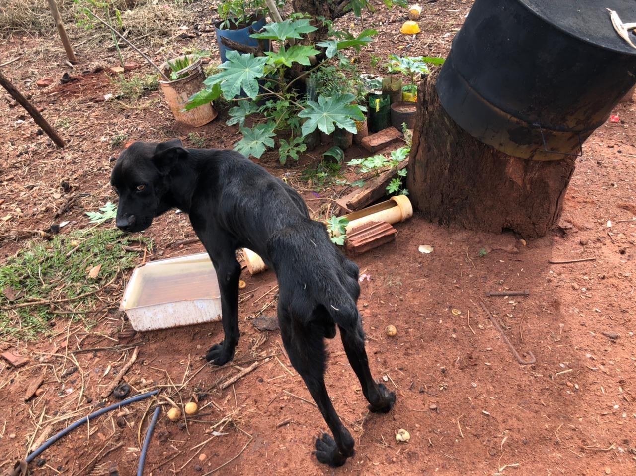 Idoso é preso em flagrante por manter cachorro doente sem tratamento em MS