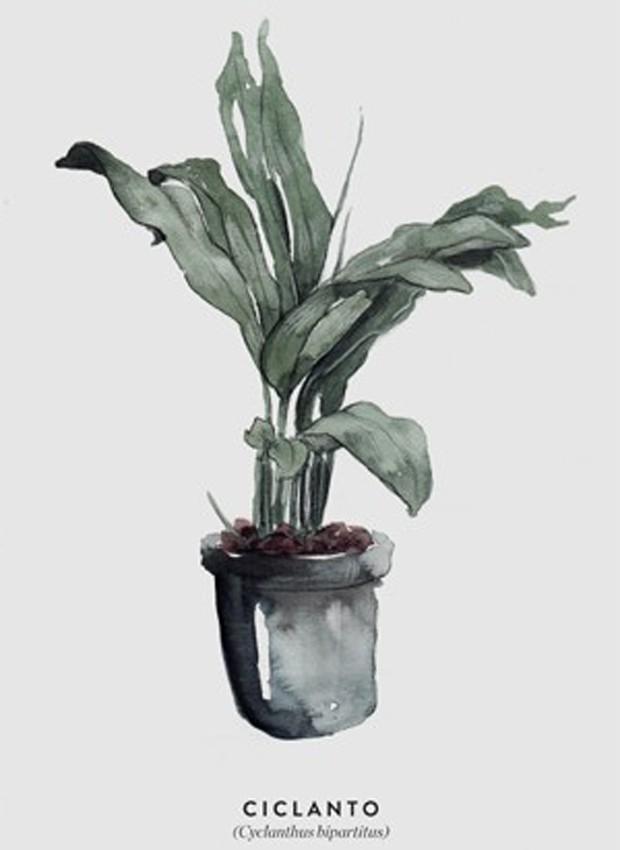 9-ideias-de-decoracao-com-plantas-para-o-dia-das-maes-gravura-botanica-impressao-ciclanto.jpg (Foto: Pinterest/Reprodução)
