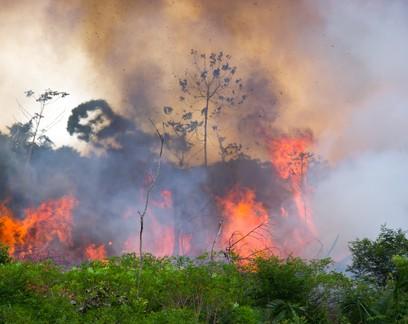 Pesquisador brasileiro cria sistema que usa inteligência artificial para prever incêndios