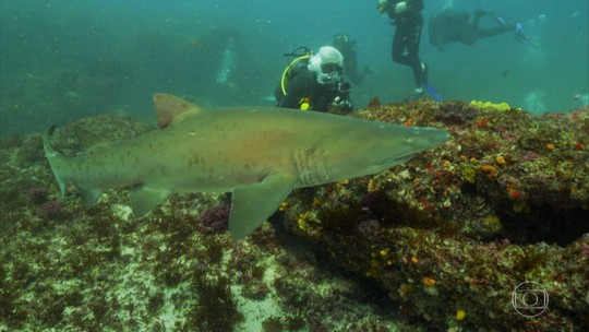 Francisco José nada com tubarões num dos mais belos pontos de mergulho da África do Sul