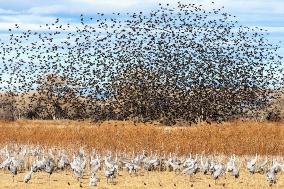 Sabe-se que 118 espécies de aves fazem a migração norte-sul nas Américas — Foto: Getty Images/BBC