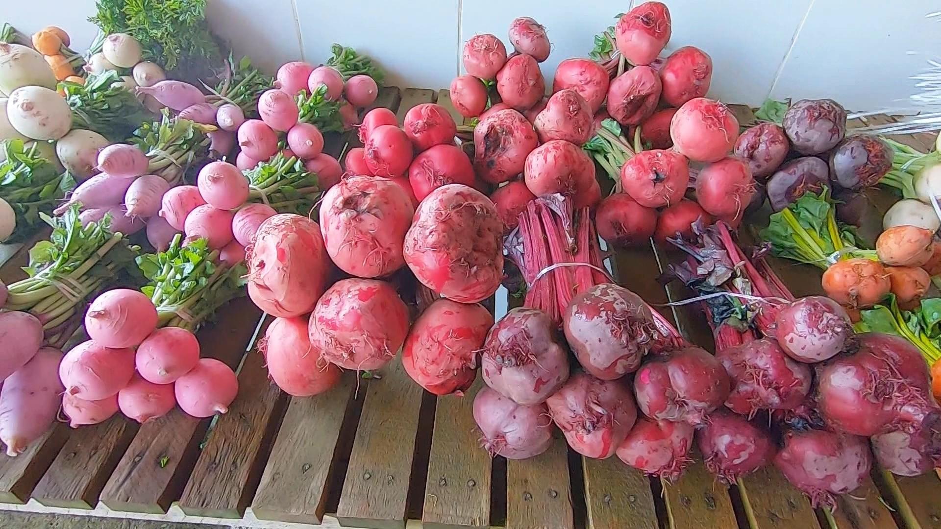 Agricultor planta hortaliças para restaurantes de alta gastronomia