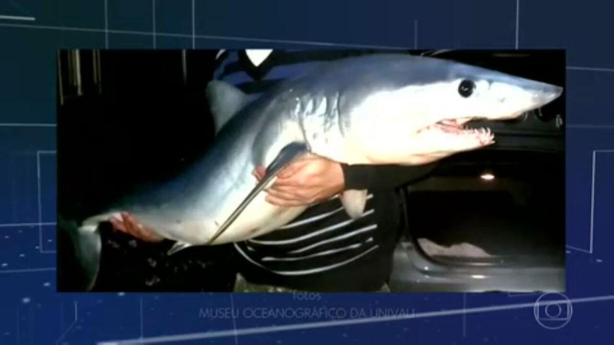 Tubarões passam a aparecer em Balneário Camboriú (SC) após obras em praia