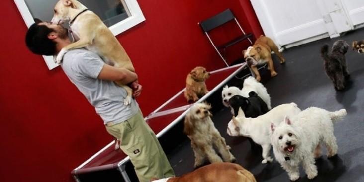 Homem ganha carinho do seu cão