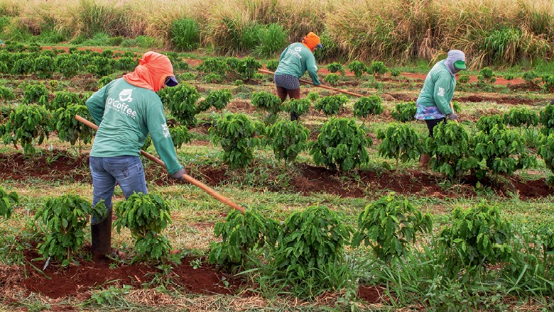 Fazenda O'Coffee: Manejo do café por funcionários (Foto: Rogerio Albuquerque)