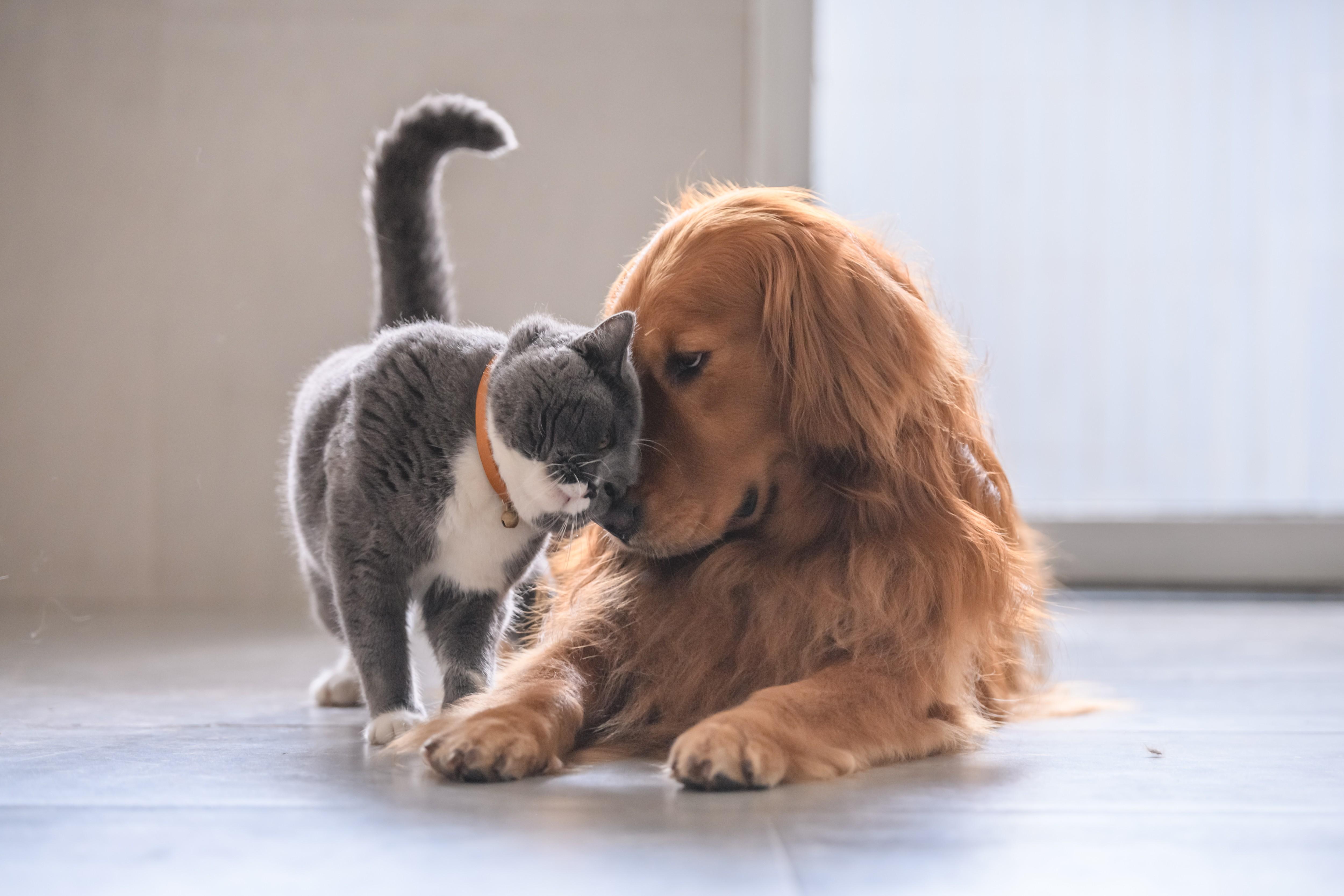 cachorro e gato (Foto: Getty Images)