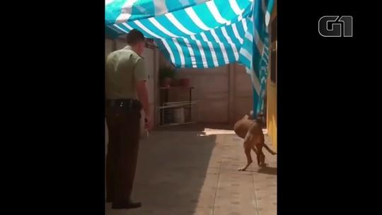Policial chileno liberta cachorro preso em toldo e ganha 'abraço' do animal; veja vídeo