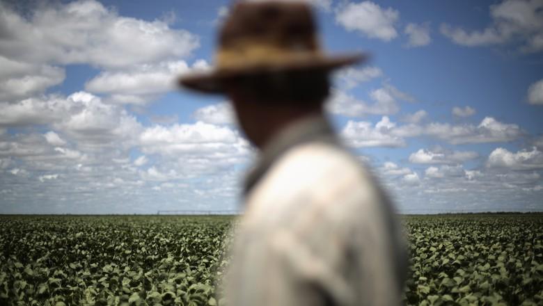Agricultor observa lavoura de soja em Barreiras (BA) (Foto: REUTERS/Ueslei Marcelino)