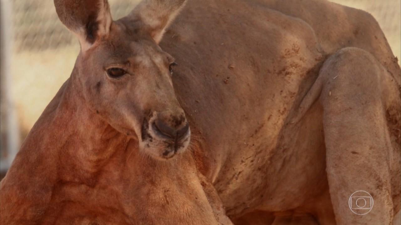 'Domingão Aventura' mostra criadores de animais selvagens