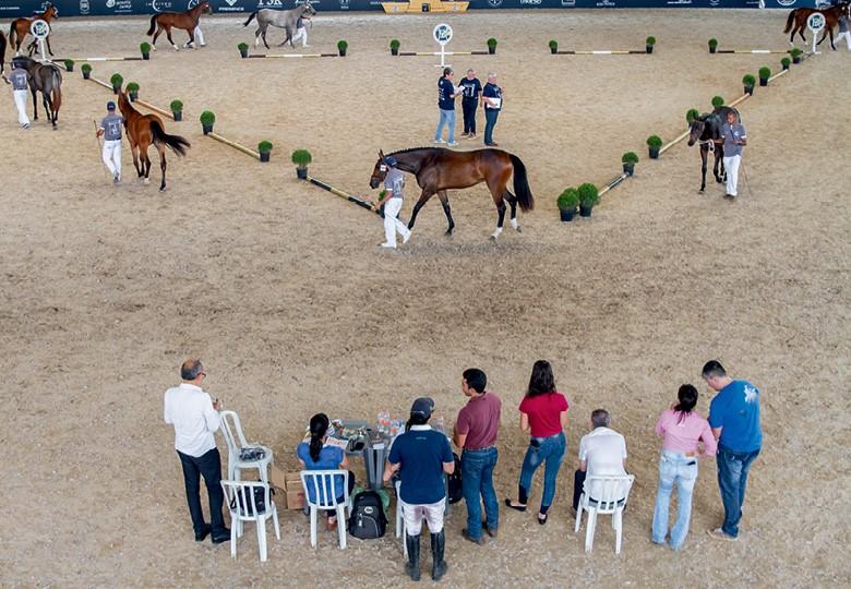 Criadores de BH trouxeram ao país o julgamento dos animais em forma de triângulo,  o que facilita a avaliação dos juízes (Foto: Rogerio Albuquerque)