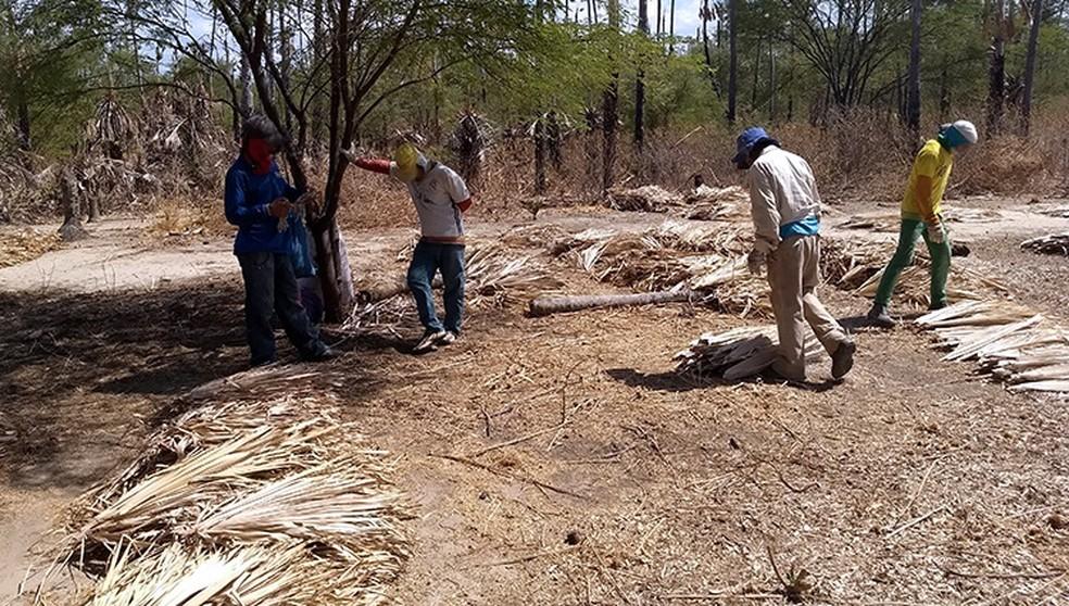 Resgatados trabalhavam de forma informal na extração da palha das palmeiras nativas e em cerâmicas locais — Foto: Ministério do Trabalho