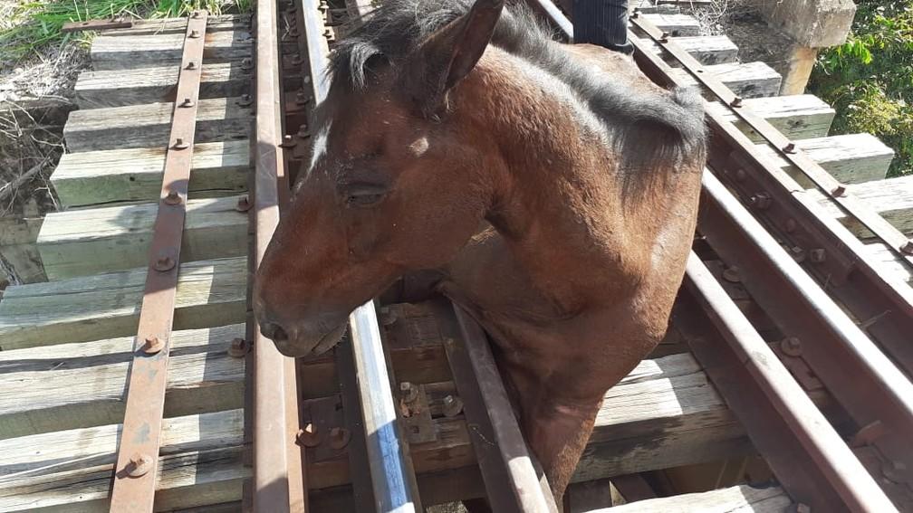 Bombeiros tiveram bastante trabalho para retirar o cavalo dos trilhos — Foto: Corpo de Bombeiros/ Divulgação