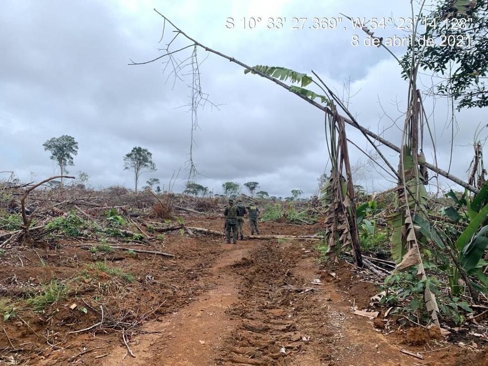 Fiscalização flagra desmatamento ilegal durante operação — Foto: Sema-MT