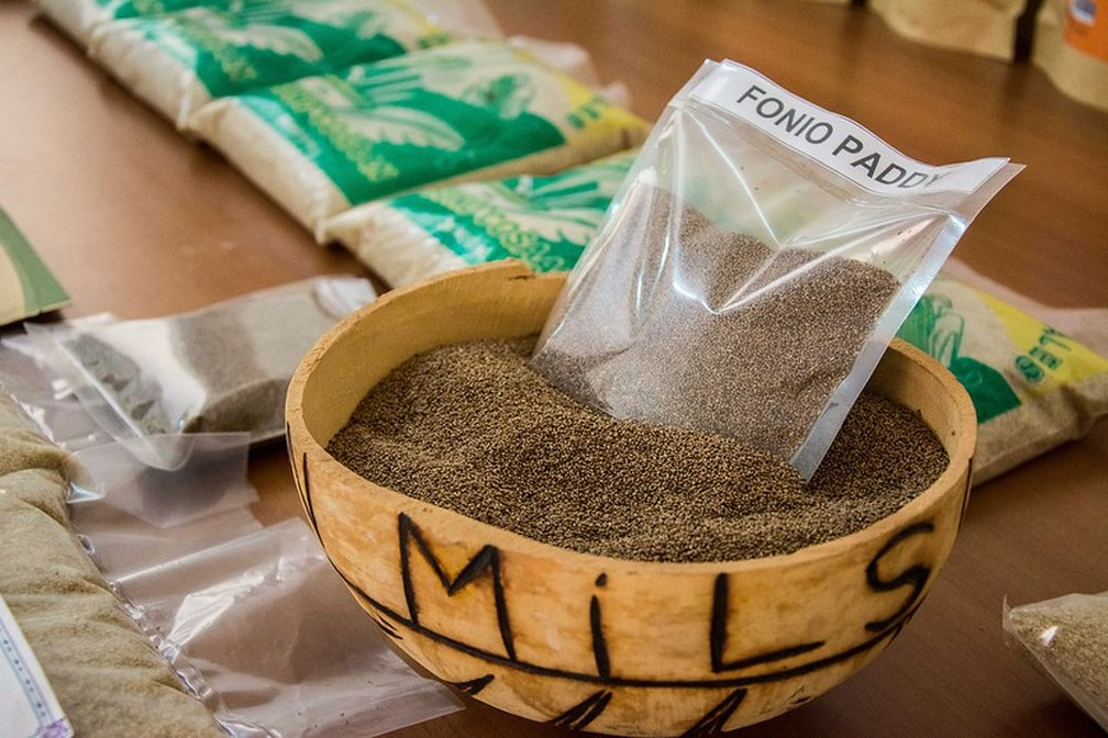 Os grãos de fonio são tão pequenos quanto areia - e a casca não comestível precisa ser removida — Foto: Jokkale.Communication/Visual Hunt