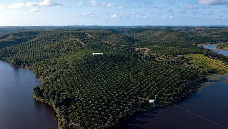 Fazenda Obrigado (Foto: Fernando Martinho)