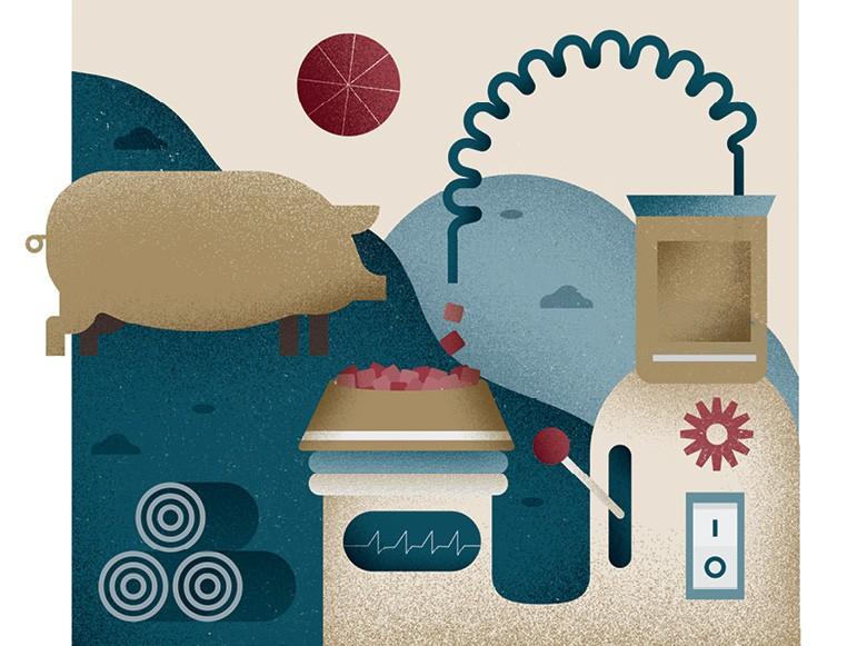 Nutrição Animal (Foto:  ilustração: Bárbara Malagoli)
