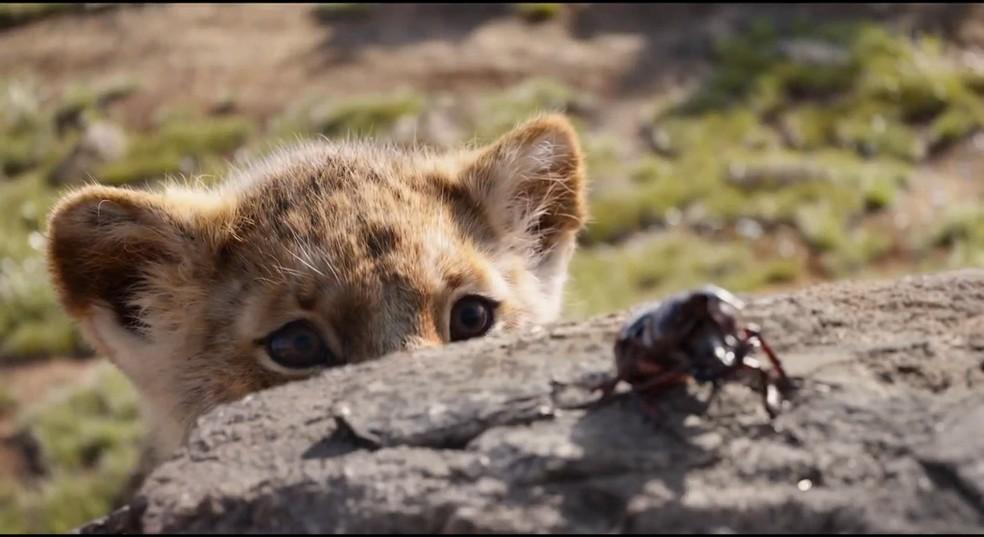 Remake em computação gráfica do 'Rei Leão' usou um filhote de leoa do Zoológico de Dallas como 'modelo' para a versão jovem de Simba — Foto: Disney