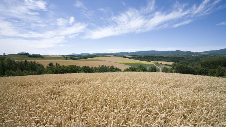 agricultura_trigo (Foto: Thinkstock)