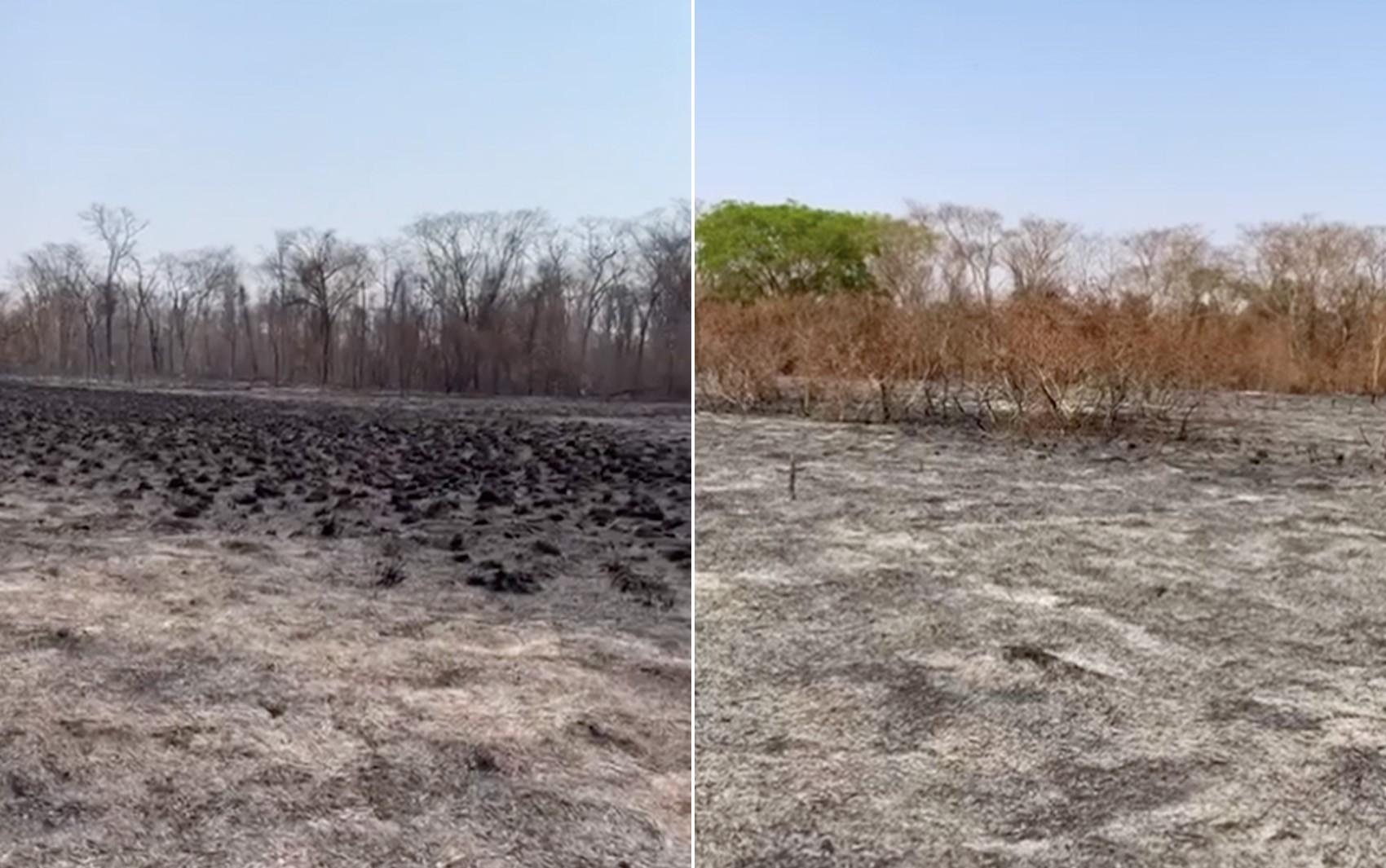 Estudante acha família de saguis morta por incêndio em mata de Terra Roxa, SP: 'não tem por onde correr'
