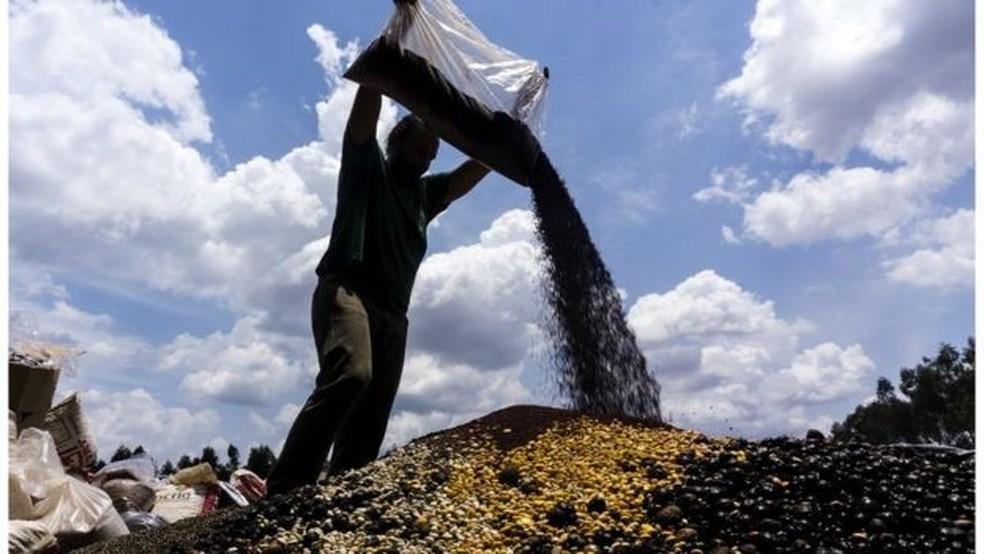 O projeto utiliza a Muvuca, como é chamada a técnica de plantio com mistura de sementes de diferentes espécies para recuperação ambiental de áreas degradadas | (Foto: Rogério Assis/ISA)
