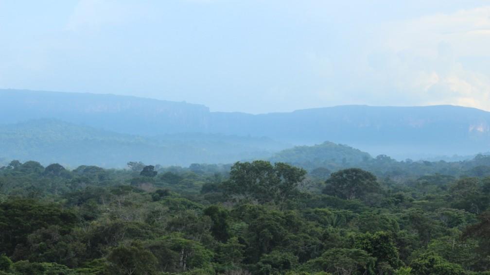 Parque Nacional Pacaas Novos.  — Foto: Flávio Terassini/Arquivo pessoal