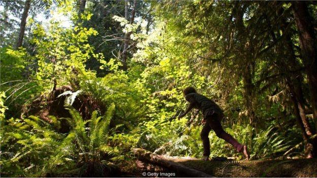 A imersão na floresta, ou shinrin-yoku, termo japonês, traz benefícios surpreendentes (Foto: Getty Images via BBC News Brasil)