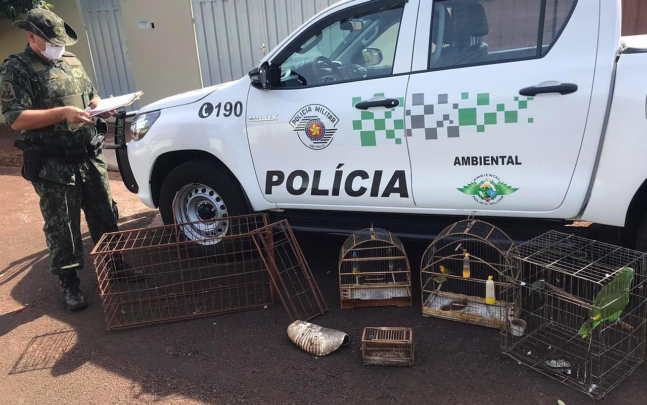 Pedreiro é multado em R$ 2,5 mil suspeito de manter aves silvestres em cativeiro em Sales Oliveira, SP