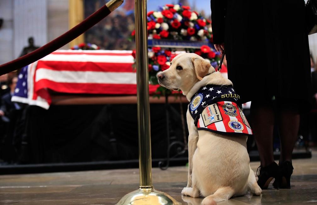 Sully próximo ao caixão do ex-presidente americano Bush Pai em 4 de dezembro de 2018. — Foto: AP Photo/Manuel Balce Ceneta