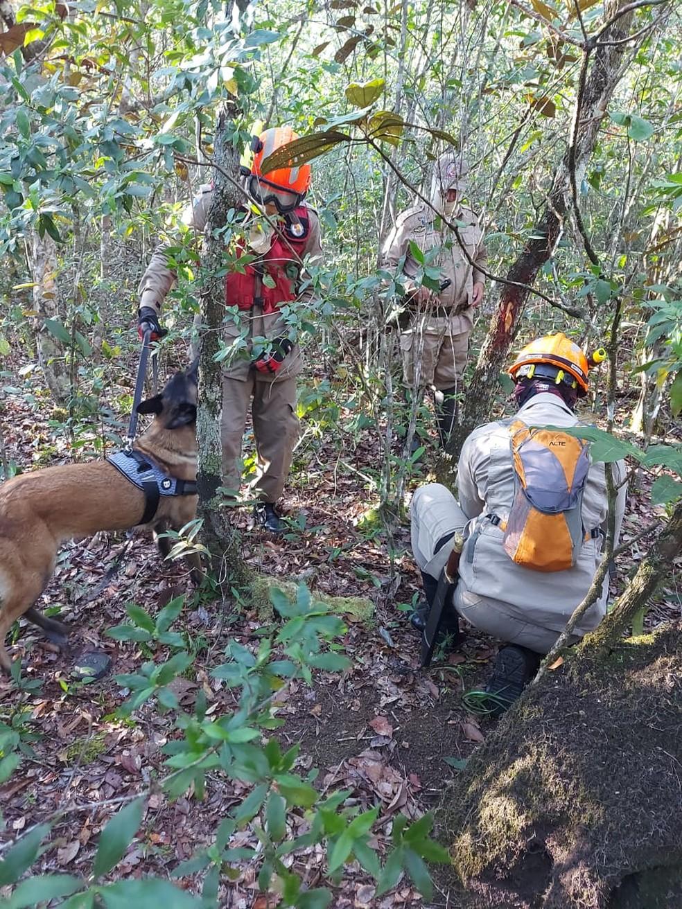 Bombeiros usaram cadela farejadora nas buscas pelo desaparecido — Foto: Corpo de Bombeiros de Mato Grosso