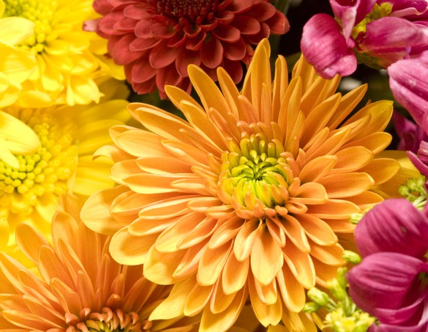 bouquet of Chrysanthemums (Foto: Getty Images)