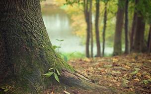 5 atitudes para preservar o meio ambiente