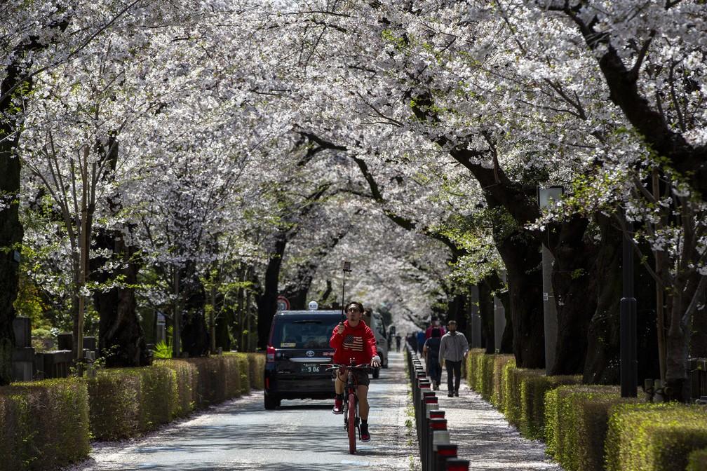 Ciclista usa pau de selfie para filmar a florada das cerejeiras em 29 de março em Tóquio. A cerejeira, chamada de 'sakura', é a flor favorita do Japão — Foto: Kiichiro Sato/AP