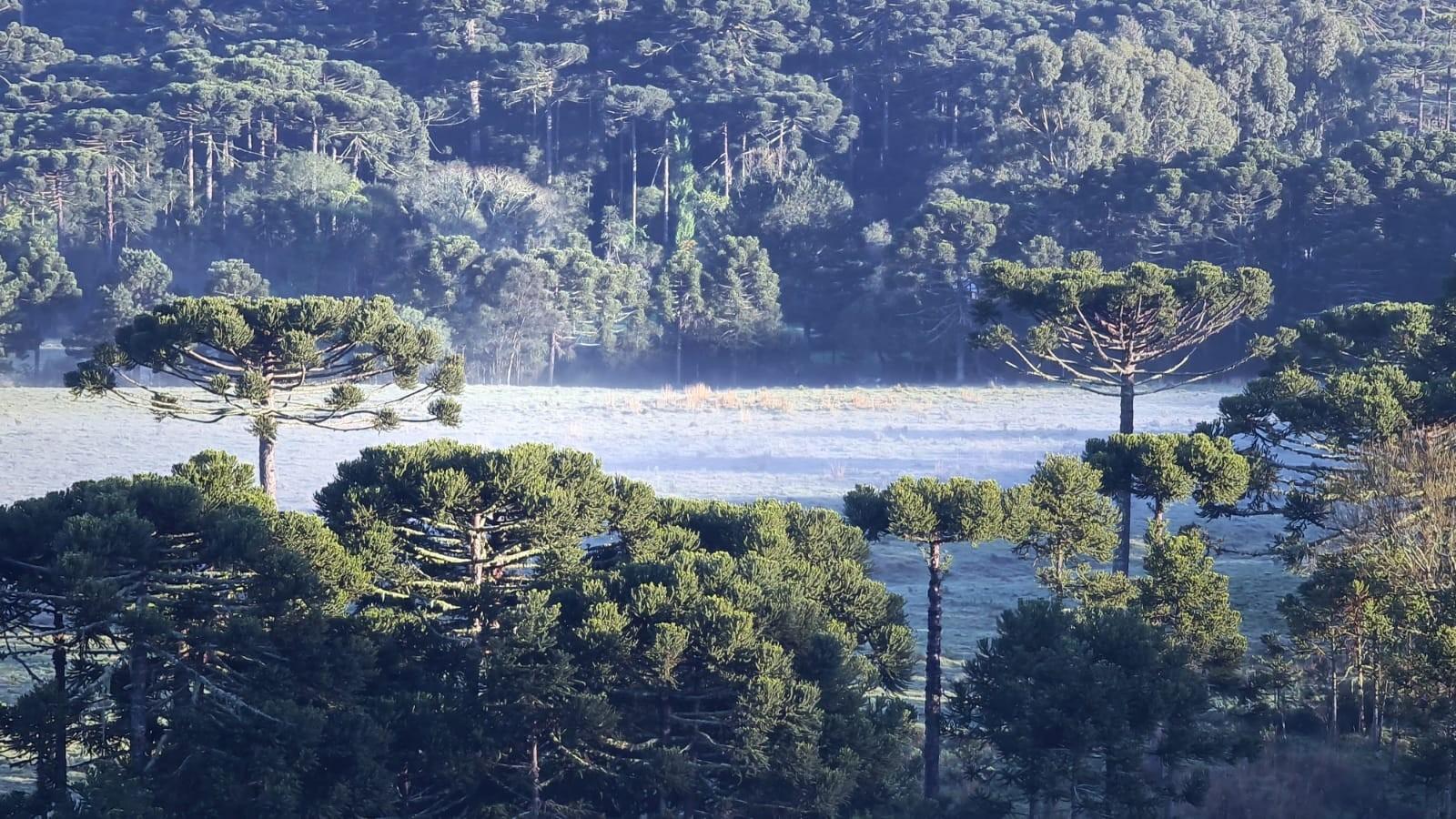 FOTOS: Serra de SC amanhece com registro de geada; confira a previsão do tempo