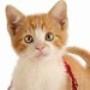 Papel de Parede: Playful Kitten