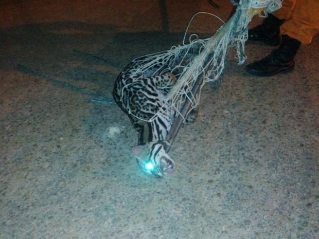 Gato foi encontrado em casa na zona Oeste de Boa Vista (Foto: Arquivo Pessoal)