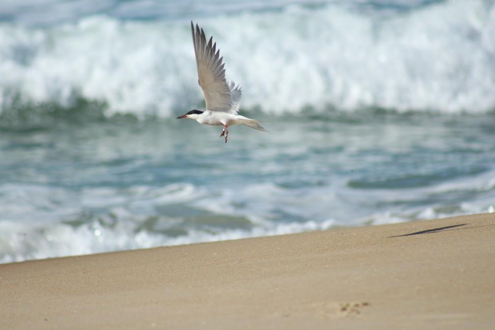 Ave com registro nos EUA é devolvida à natureza em Florianópolis — Foto: Nilson Coelho