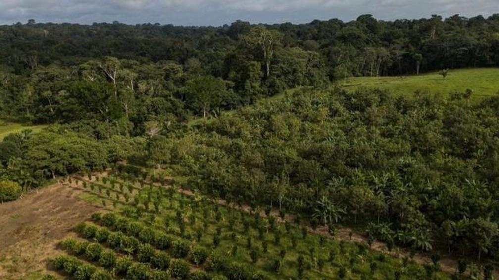 A foto mostra um Sistema Agroflorestal dentro da reserva Chico Mendes, no estado do Acre, e, ao fundo, uma floresta — Foto: Flávio Forner/Divulgação