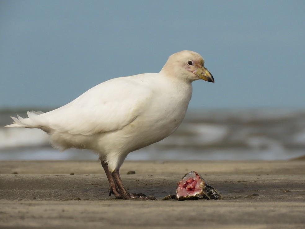 Raphael Kurz foi surpreendido pelo flagrante da ave, um dos mais emocionantes da carreira — Foto: Raphael Kurz/VC no TG