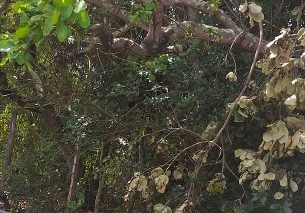Corpo foi encontrado em área de matagal em Parnamirim — Foto: Redes sociais